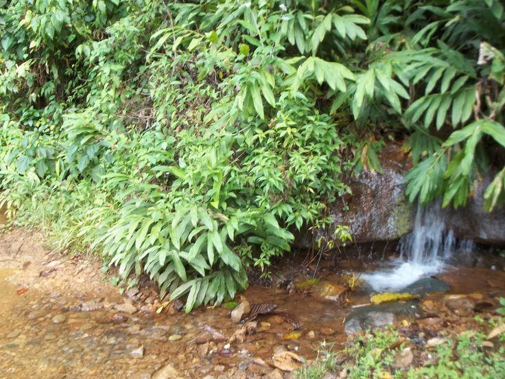 A la orilla del camino entre las veredas Palermo y Alto Cáceres del municipio de Trujillo, esta quebrada lo atraviesa. Agua pura.