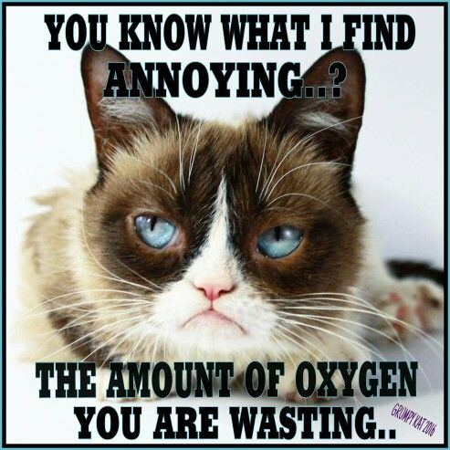 Grumpy Cat Saying Good