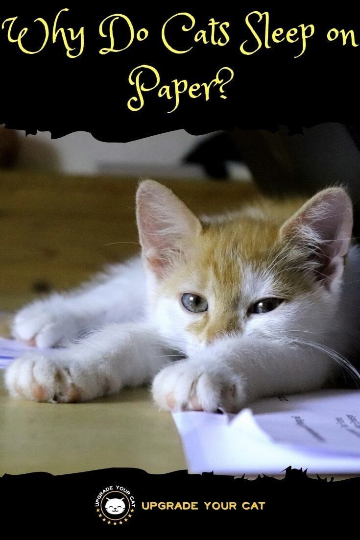 Why Do Cats Sleep On Paper Hint Not Just To Annoy You Upgrade Your Cat Cat Sleeping Cat Training Cat Behavior