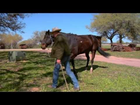 Buck Brannaman Disk 1 - GROUNDWORK