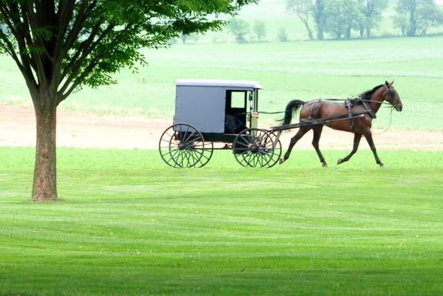 Because if Us Christians Really Care……. And We Really Do — right? » A Holy Experience: Free Gifts, Christian, Horses Carts, Hors Carts,  Horse-Cart