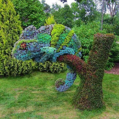 Succulents topiary in the shape of a Chameleon. Montreal Botanical Gardens