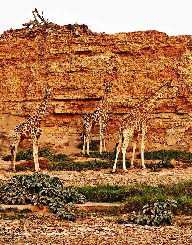 the background of the skeleton coast of africa The most haunting and evocative of all namibia's attractions, this treacherous  stretch of wild atlantic shore is backed by a bone-bleaching desert heaped high.