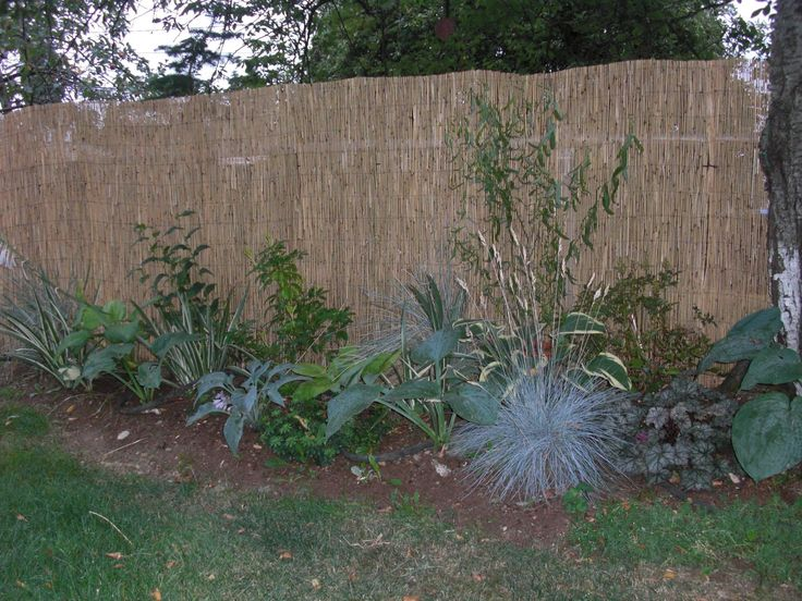 reed fencing covers ugly chain link