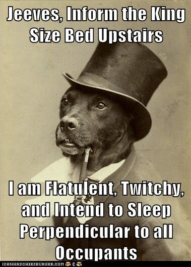My dog... everynight