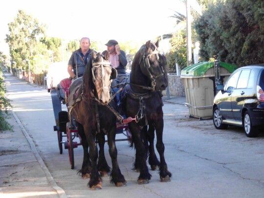Coche caballos percherones