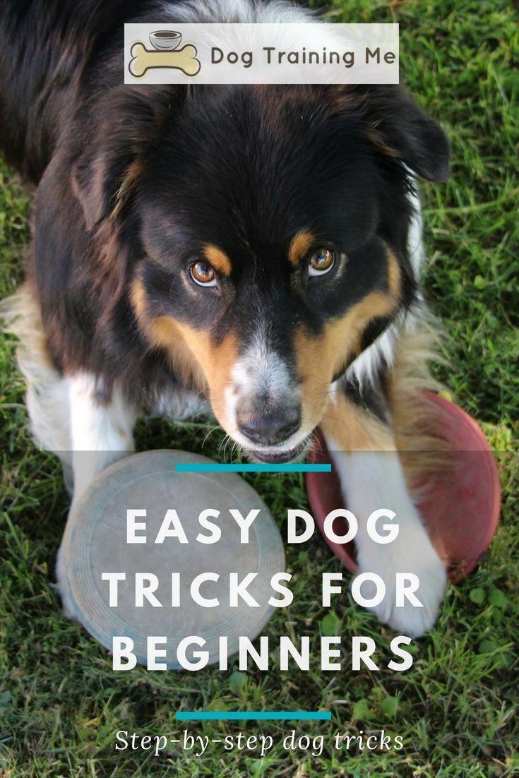 Dog Training At Home Tips Dogtrainingmilton 1292739958