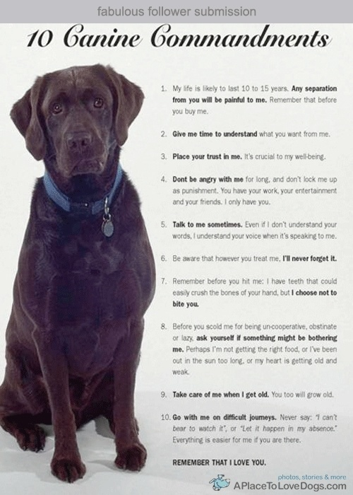 10 canine commandments luladrinski5l35