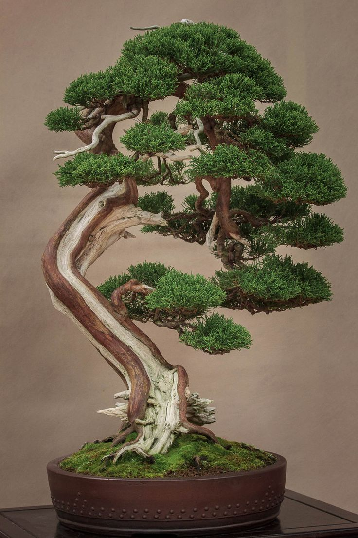 best bonsai images on pinterest plants gardening and beautiful