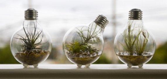 How cute are these mini-terrariums?