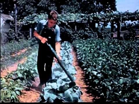 Victory Gardens (1940's) | WW2 Homefront Film