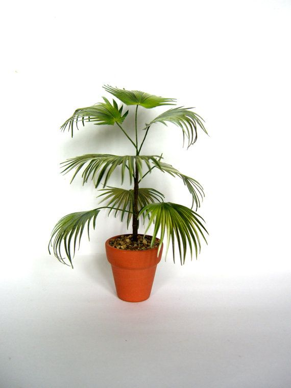 CHINESE FAN PALM in terracotta pot by LadiesMileMiniatures on Etsy, $32.99
