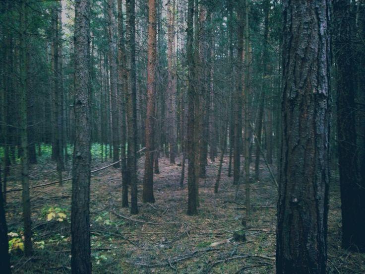 ✅ #forest#naturelover#adventure#trees