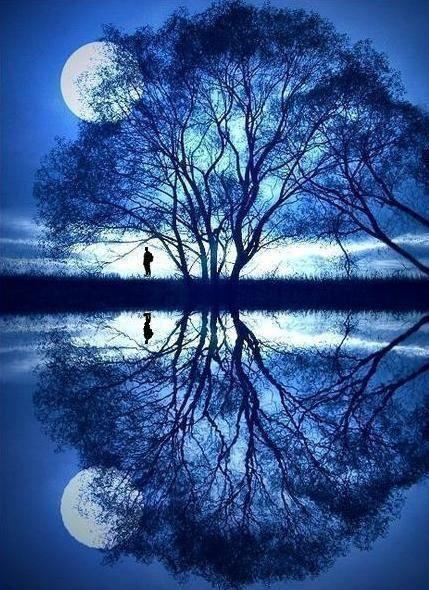 Gorgeous! Moon, tree, reflection