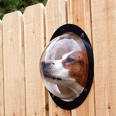 .Doggie Garden Fence Peep Hole ~ This is so cool & funny at the same time!