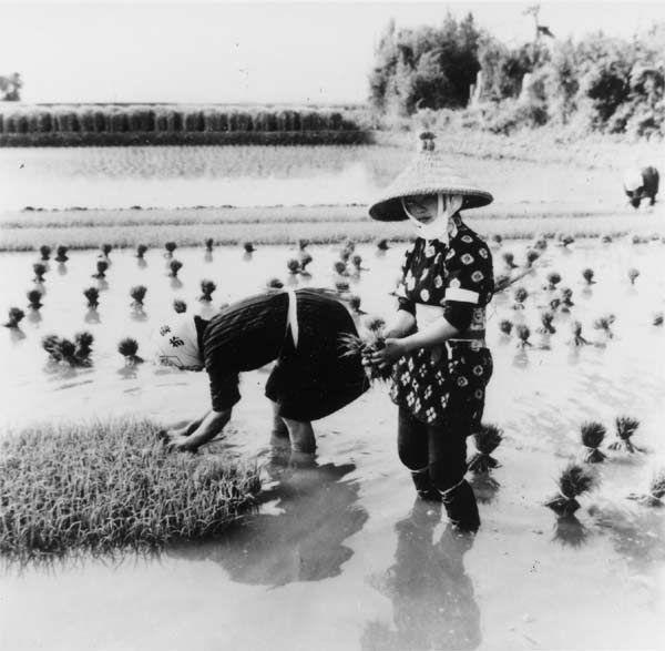[写真] のらぎ【野良着】 昭和30年代