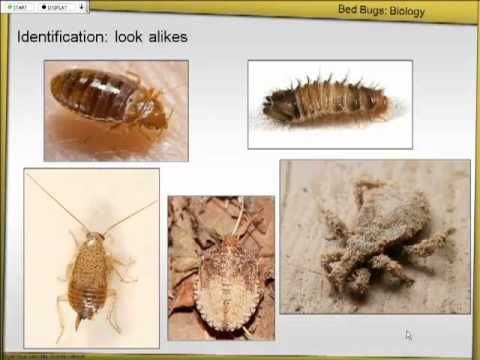 Learn About How To Identify Bed Bugs Quickly Tuesday