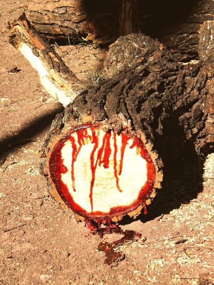 Жутковатое тиковое дерево http://kleinburd.ru/news/zhutkovatoe-tikovoe-derevo/