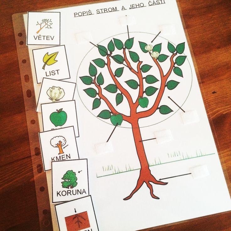 Přírodopis,Strukturovaný úkol - Popiš strom nebo rostlinu a…