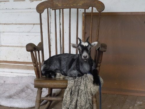 FARMHOUSE – ANIMALS – move over dog, this is now my territory. I own this front porch.