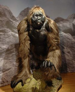 """Bigfoot, or Sasquatch or Caiola - term derived from Halkomelem - a language of the linguistic group salishan, natural southwestern British Columbia) is described as a creature in the form of a great ape that lives in wild and remote regions of the United States and Canada. It is claimed that an animal would be akin to Tibetan yeti (the """"Abominable Snowman""""). In 2007 he organized an expedition in search of evidence or even own Bigfoot. But nothing was found."""