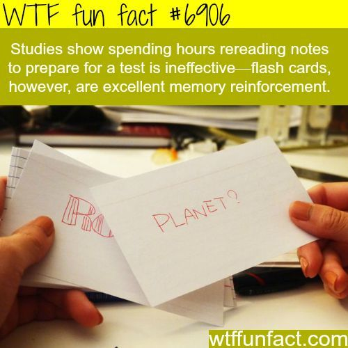 How to study in for a test - WTF fun fact