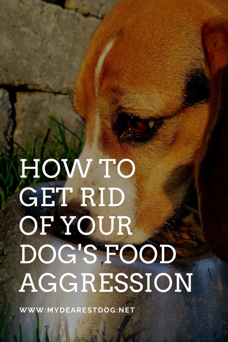 Dog Food Aggression Around Food How To Get Rid Of A Dog S Food