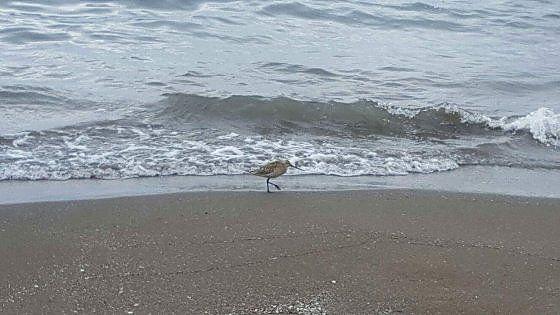 L'uccello migratore più resistente del mondo avvistato ai Bagni Elena