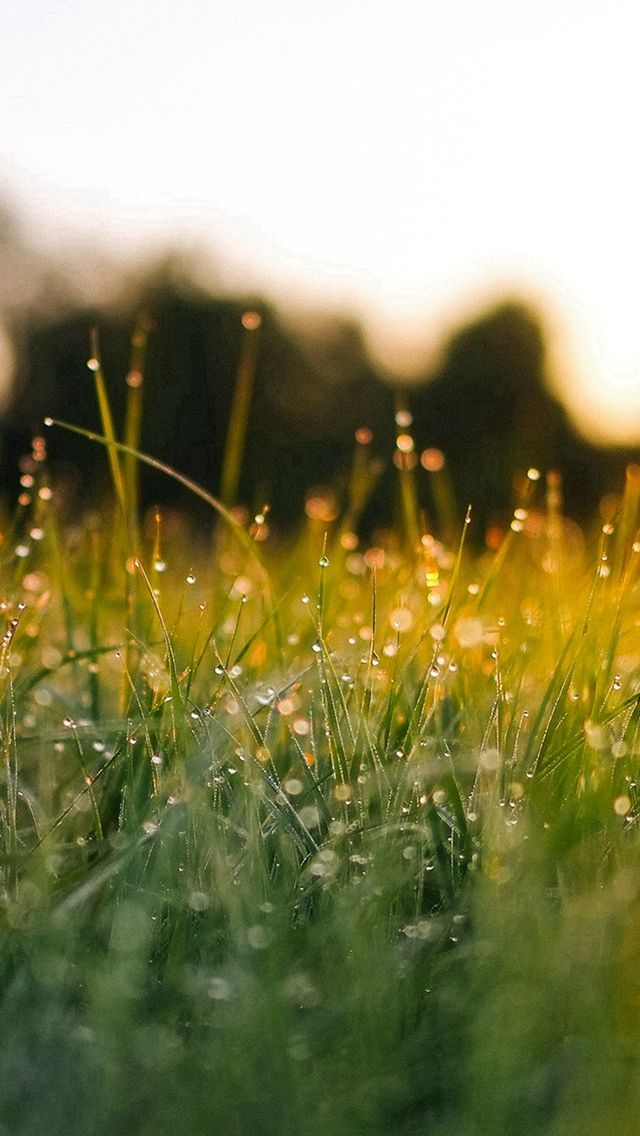 Lawn Green Nature Sunset Light Bokeh Spring iPhone 5s wallpaper