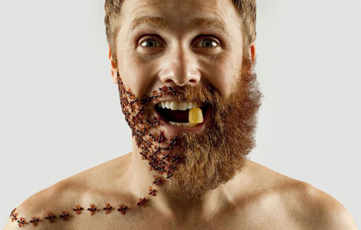 Artist Completes Half Beard With Insects (And Other WTF Stuff You GOT to See) -  #art #artist #beards #hipster #wierd
