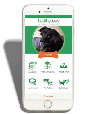 Healthy Paws Review #lowest #auto #insurance #rates http://insurance.nef2.com/healthy-paws-review-lowest-auto-insurance-rates/  #compare pet insurance # Healthy Paws Review Why They re Our #1 Choice: #1 for the LA Times, Seattle Times in Online Reviews Healthy Paws is our top choice because they offer the best coverage when your pet is sick... Read more