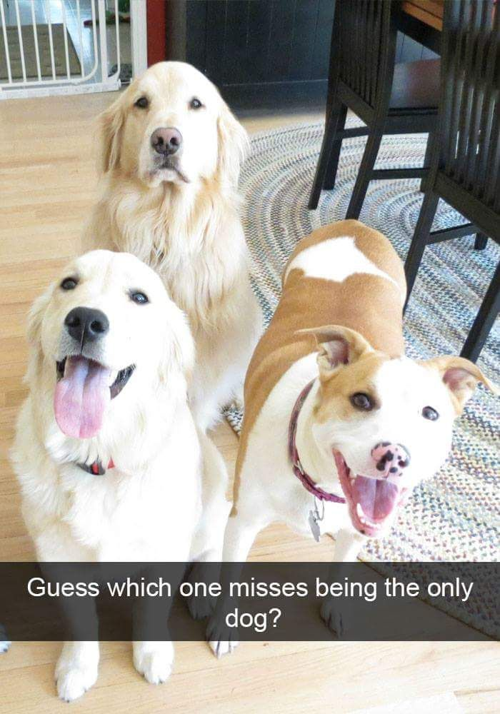 LOL! Too cute! Misses being the only dog