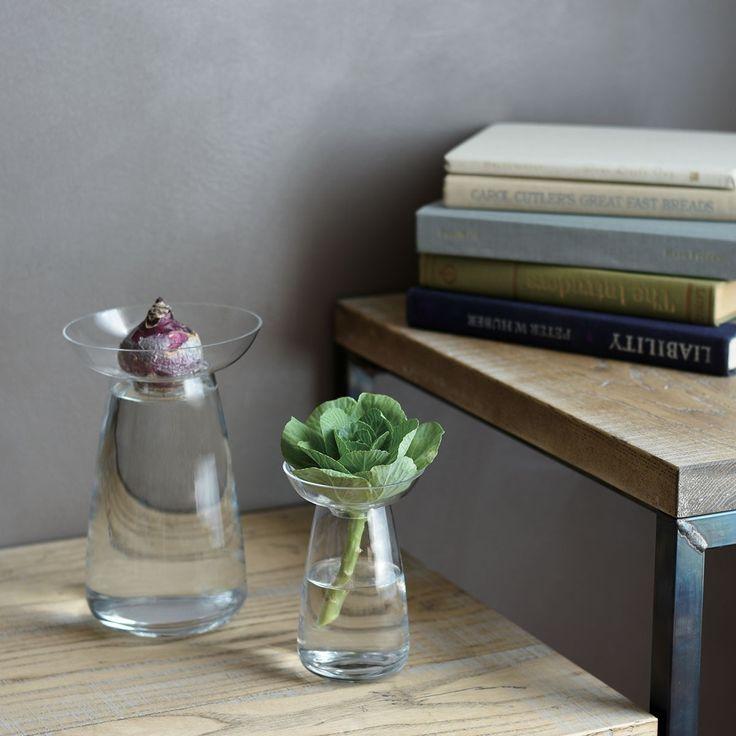 1000 id es sur le th me culture de plantes grasses sur pinterest plantes grasses plantes. Black Bedroom Furniture Sets. Home Design Ideas