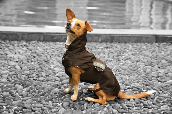 Tartufo Brown Raincoat for your dog. Classy by AmiciDiAlia on Etsy, €56.00
