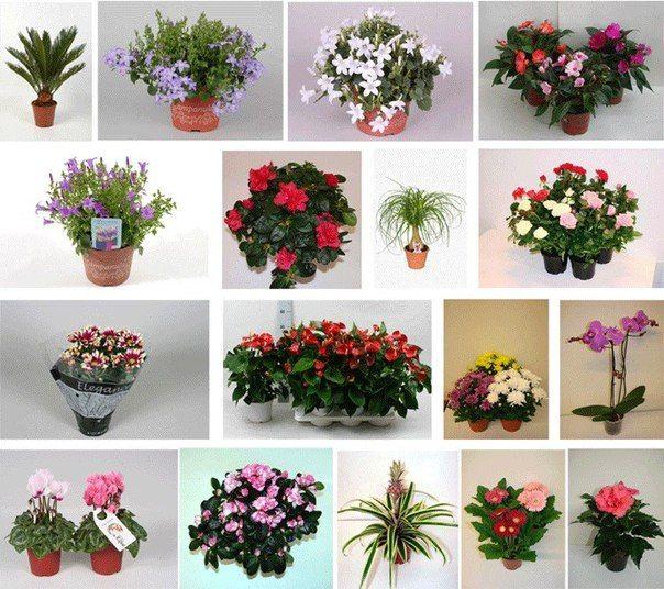 Правильное удобрение комнатных растений