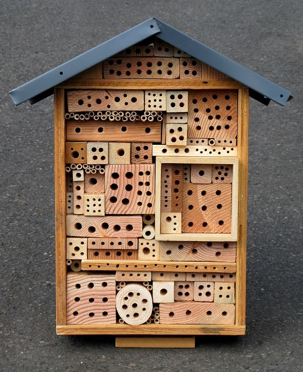 solitary bee house - Google Search