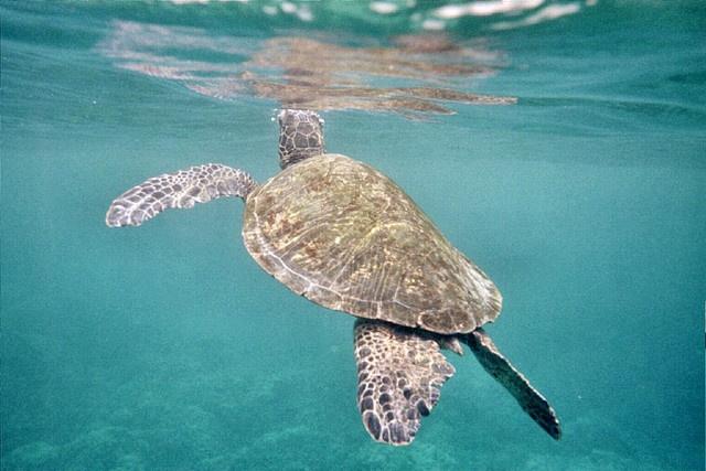 another Hawaii memoryHawaii Paradise, Favorite Places, Favourite Places, Sea Turtles, Hawaii Memories
