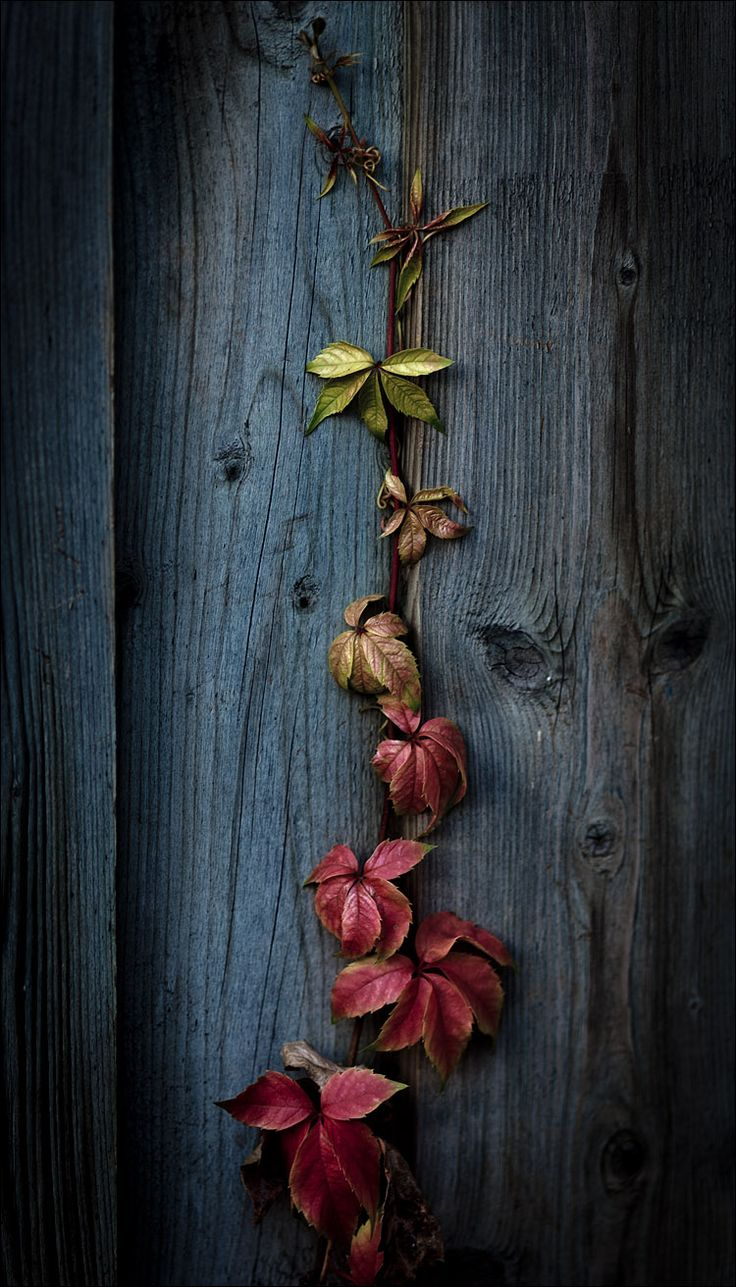 best yapraklar images on pinterest butterflies nature and carving