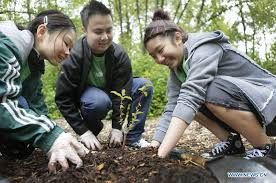 Image result for people planting trees