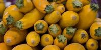 The Best Way to Put Up Squash in Freezer Bags without blanching