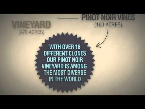 The Domaine Pinot Noir Story – Animated. Social Media -- > goo.gl/Rgu7t