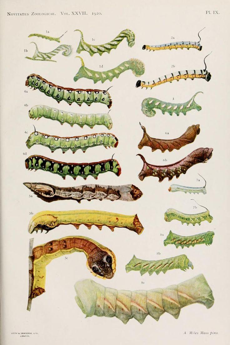 waiting for rebirth.. v. 27 (1920) - Novitates Zoologicae. - Biodiversity Heritage Library