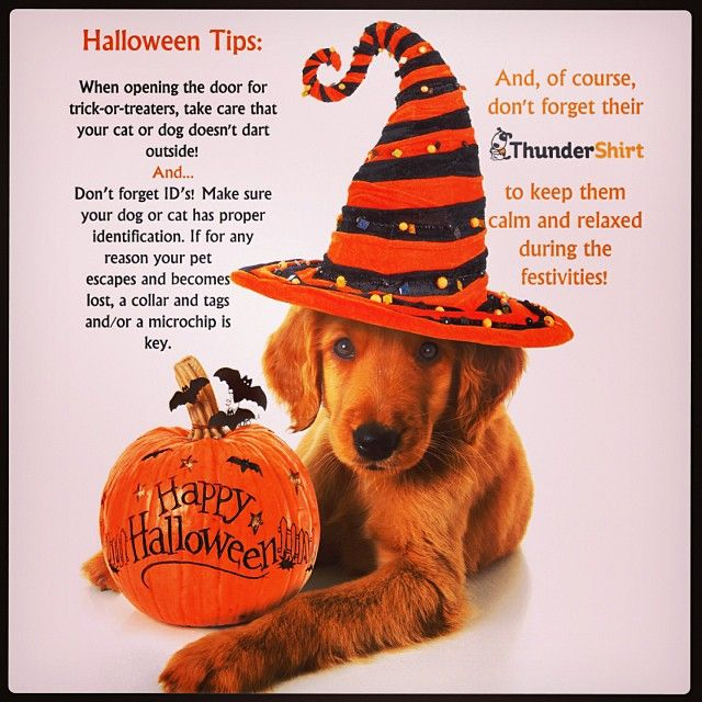 Want to win $100 ThunderWorks shopping spree?! All you have to do is:  1. Follow us on Instagram: @Thunderworks 2. Share our Halloween Tips every time you see us share the image (anywhere you can)! 3. Tag your image with #ThunderTIPS 4. Wait for 1 lucky winner to be announced November 1st!!  Happy sharing:)