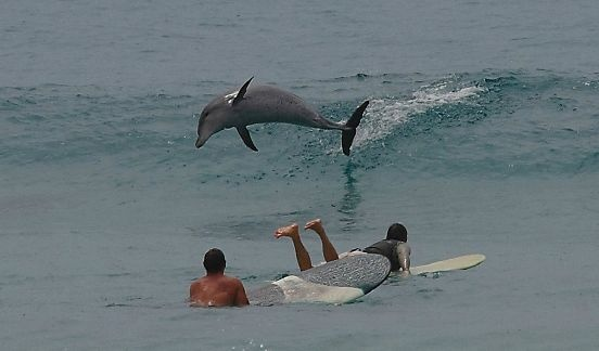 Surfing with dolphins - so Byron bay - nature comes out to play in the surf