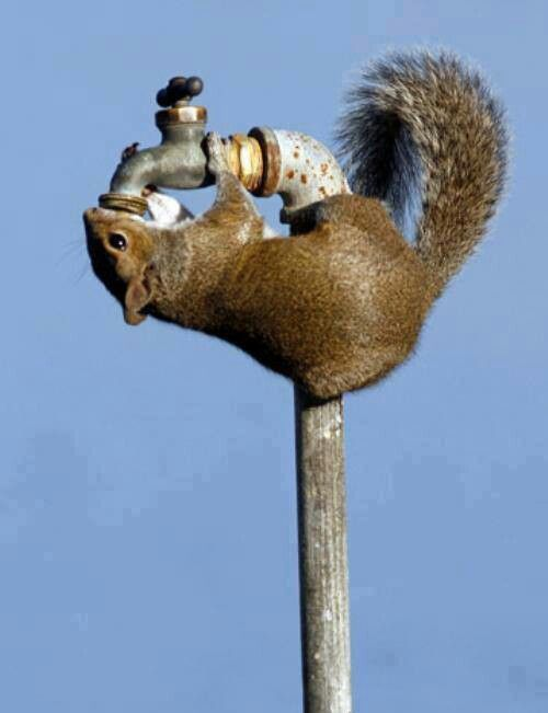 leave out a cup, bucket with water for wildlife, refill every few days
