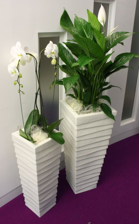 office flower pots. textured stack displays in an indoor office setting with live white flowering spathifyllum plants see flower pots a