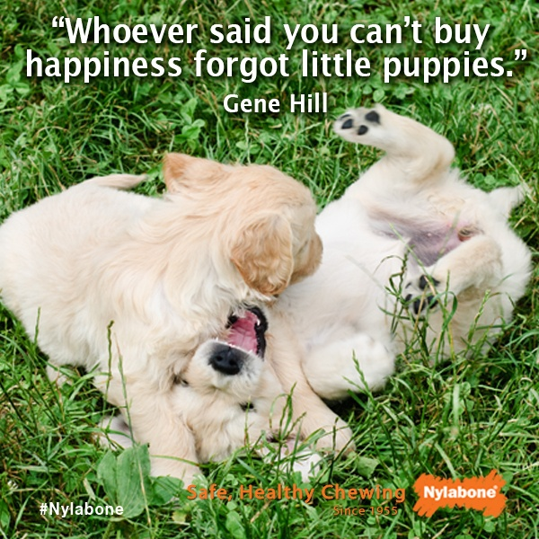 """""""Whoever Said You Can't Buy Happiness Forgot Little"""