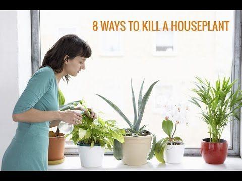7 mejores imágenes de plantas en pinterest | plantas, plantas de