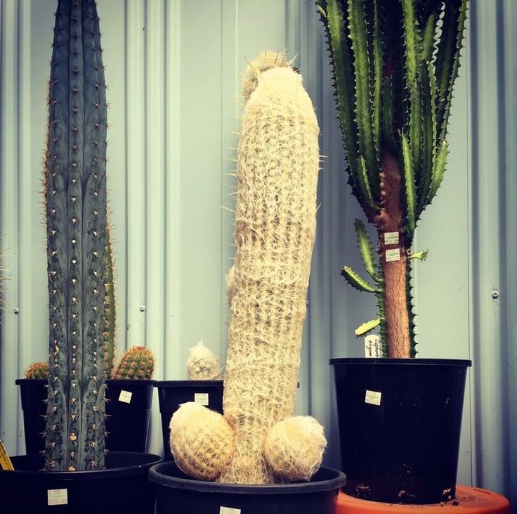 When you love cactuses