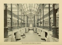 Medical Heritage Library Increases Warren Museum Accessibility